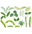 set jungle plants vector image