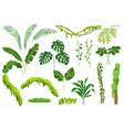 set of jungle plants vector image