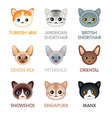 Cute cat icons set III vector image vector image