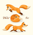 wild fox images pretty animal in different poses vector image vector image