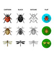 insect bug beetle paw insects set collection vector image