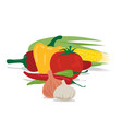 tomato garlic onion corn and peppers vector image vector image