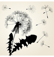 Blow dandelion silhouette vector image