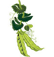 branch with two pea pods vector image