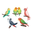 Cartoon parrots set vector image vector image