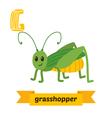 Grasshopper G letter Cute children animal alphabet vector image