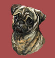 pug colorful hand drawing portrait vector image vector image