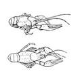 monochrome sketch of crayfish vector image
