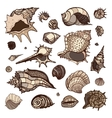 Sea shells set vector image vector image