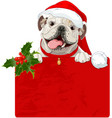 christmas english bulldog vector image vector image