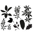 plant elements from jungle vector image