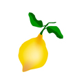 A Fresh Lemon on A White Background vector image vector image