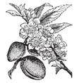 almond-tree vintage vector image vector image