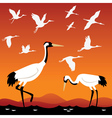 Flying cranes vector image vector image