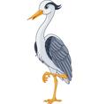 Grey Heron vector image vector image