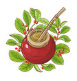 mate tea vector image
