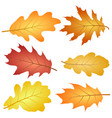oak leaves collection in red yellow brown vector image