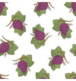 red grapes pattern vector image vector image