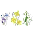 spring flowers vector image vector image