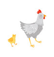 gray hen walking with little yellow chick cartoon vector image
