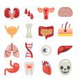 human internal organs flat icons vector image vector image
