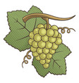 white grapes woodcut vector image vector image