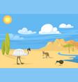 australia wild background landscape animals