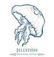 Jellyfish Drawing vector image vector image
