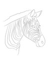 portrait of zebra drawing lines vector image