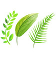 three green leaves in watercolor style vector image
