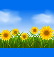 background scene with sunflowers in garden vector image vector image