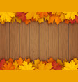 border from fallen maple leaves vector image vector image