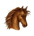 Brown arabian horse sketch for equine sport design vector image vector image