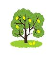 Lemon Tree Icon vector image vector image