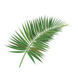 palm tree branch vector image vector image