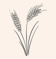 Rye Ear vector image vector image