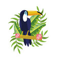 tropical tucano cartoon vector image
