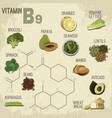 vitamin b9 food vector image vector image