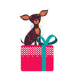 funny toy terrier dog sitting on presnt box with vector image vector image