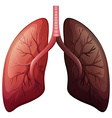 Lung cancer diagram in large scale vector image vector image