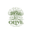olive label emblem design olive tree llustration vector image vector image