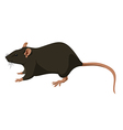 Rat nature vector image vector image