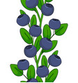 seamless pattern of blueberries ornament leaves vector image