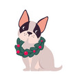funny french bulldog dog in christmas fir wreath vector image vector image