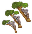 funny koala bears rest on trees animals vector image vector image