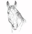 horse portrait-5 vector image vector image