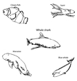 Marine inhabitants with names Pencil sketch by vector image vector image