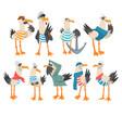 seagulls sailors set funny captain birds cartoon vector image vector image