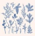 vintage botanical set winter plants vector image vector image