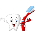 Dental Tooth and Toothbrush cartoon character vector image vector image